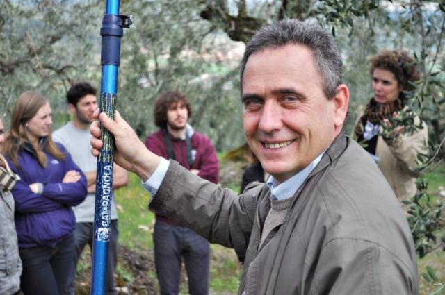 Montestigliano Olive Trees.